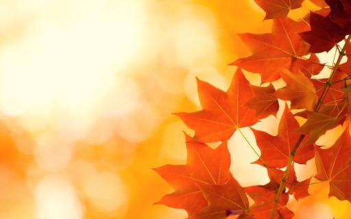 autumn_leaves_brightness_76503_1680x1050