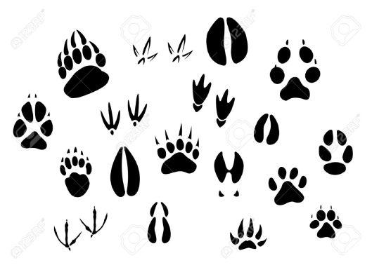 mammal-prints